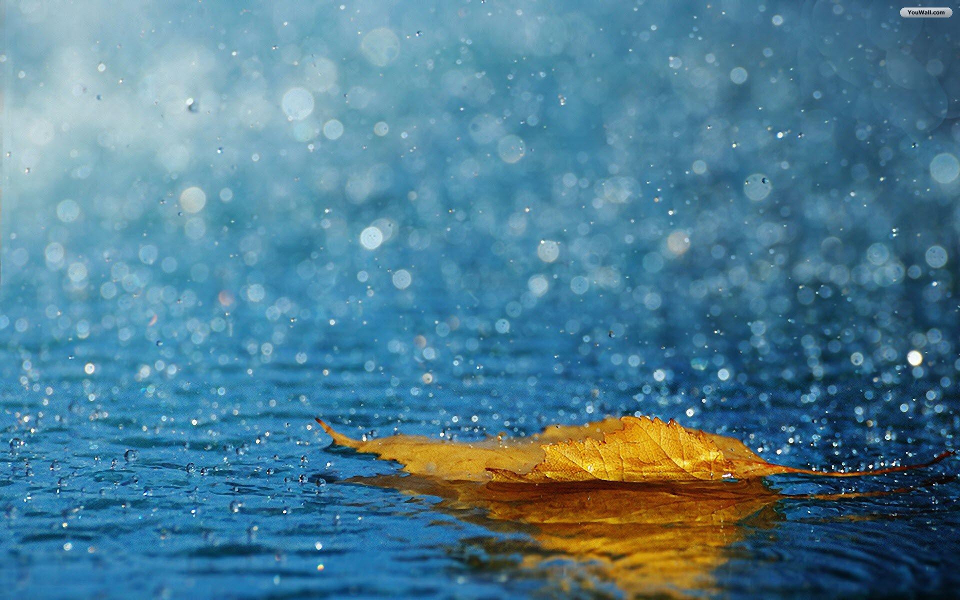 Membiarkan Tetesan Hujan Menyapa