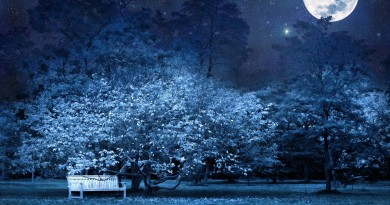 night_bench_park_trees_stars_full_moon_sky_light_darkness_62340_3840x2160
