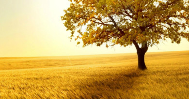 Nature-Golden-Sunset-Lonely-Tree-Grass-Field-ipad-wallpaper-ilikewallpaper_com