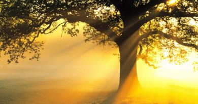 big-tree-with-evening-sunset-light-wallpaper