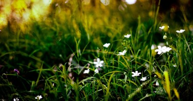976_grass and cute white flower
