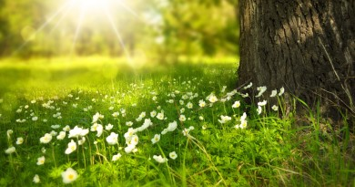 Spring-ray-of-lights-white-wild-flowers-tree-nature-ultra-hd-wallpapers-4k-2560x1440