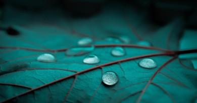 Blue-Leaf-Water-Drop-Wallpaper-HD