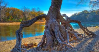 beautiful-tree-roots-near-the-river-4765-1920x1080