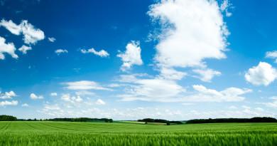 ws_Grass_Green_Wheat_Field_&_Sky_1920x1200
