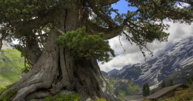 TrEEs-trees-19955040-1920-1080