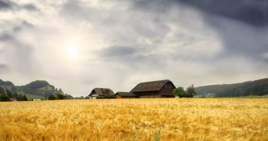 fields-wheat-field-hills-peaceful-sky-colors-trees-nature-architecture-beauty-houses-beautiful-clouds-house-best-wallpapers