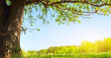 Summer-sun-under-a-tree_2560x1600