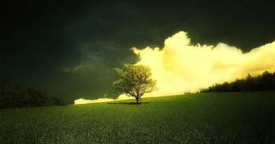 ws_Yellow_Cloud_Tree_Grass_Forest_1920x1080