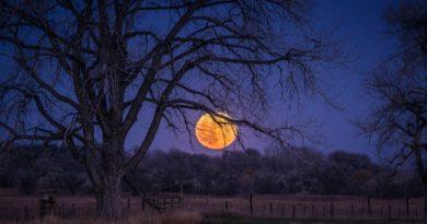 the-field-field-tree-night-blue-sky-moon-full-moon