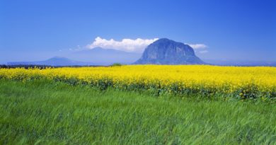 ws_Yellow_Flower_Field_Grass_Peak_1920x1200