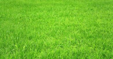 grass_wallpaper445