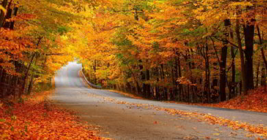leaf-street-autumn-1