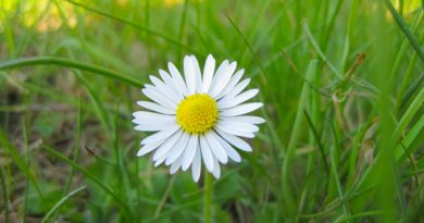 white_flower_and_green_grass-wallpaper-1920x1080