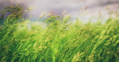 Ustaz Afifi – Kaidah Mengenal Allah
