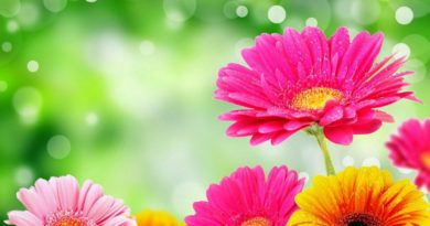 Ustaz Afifi – Mengenal Allah