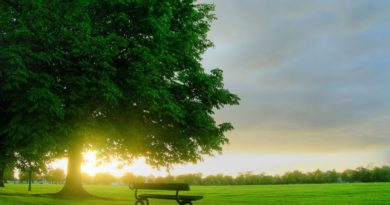 Pohon Keimanan